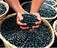 berries Kan jag banta med acai?